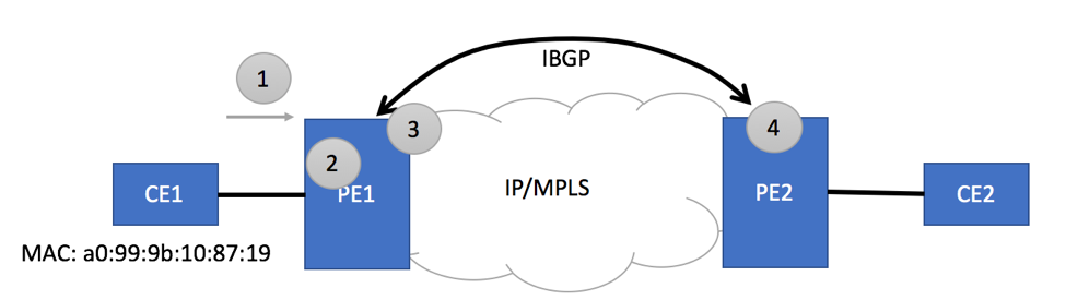 Basic EVPN Topology